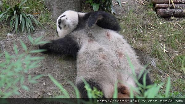 熊貓ㄚ頭5.JPG