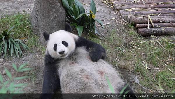 熊貓ㄚ頭7.JPG