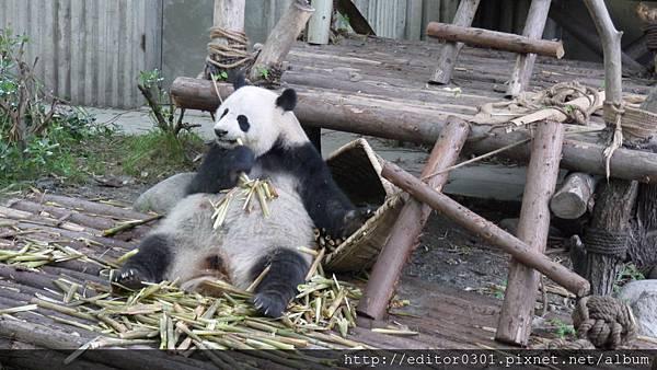 熊貓ㄚ頭8.JPG