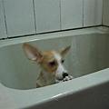 不要留我一個人在浴缸裡