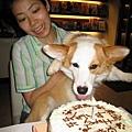 河馬:媽咪我要吃蛋糕啦~~