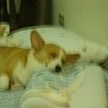 還是媽咪的枕頭舒服