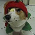 這張眼睛好好笑喔~帽子太緊了