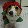 碼麻~我可以吃餅乾了嗎...
