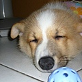 aniki睡覺時眼睛很像小丑.哈哈哈