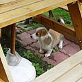 躲在桌子下