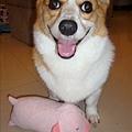 這是我的可愛小豬枕頭