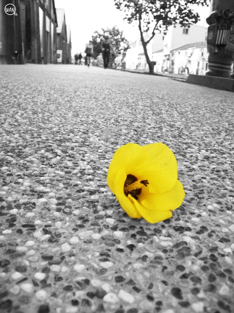 黃花 抽色