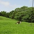 跟著它進草叢..會到哪呢?