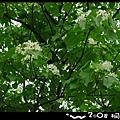 DSC07833-1.jpg