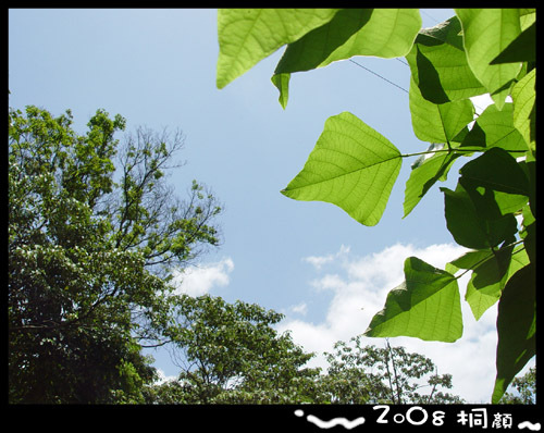 DSC07858-1.jpg