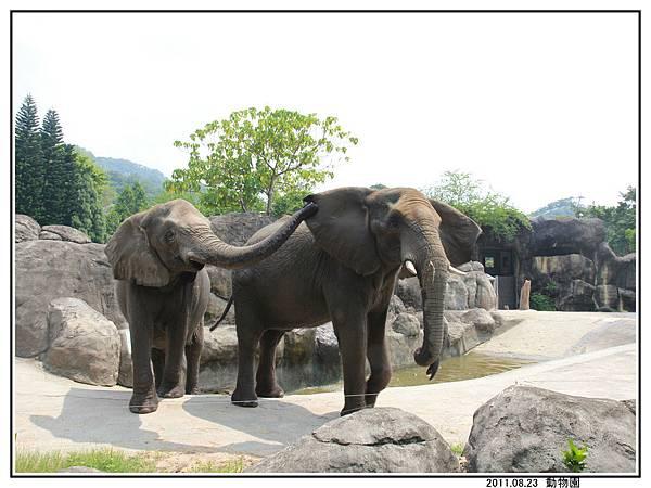 動物園 (18).jpg