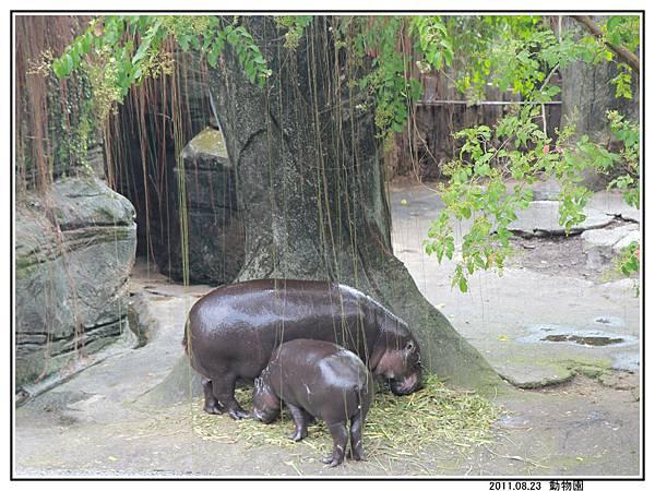 動物園 (22).jpg