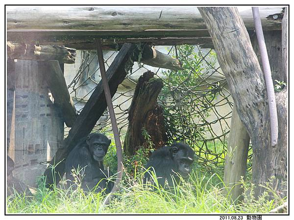 動物園 (33).jpg