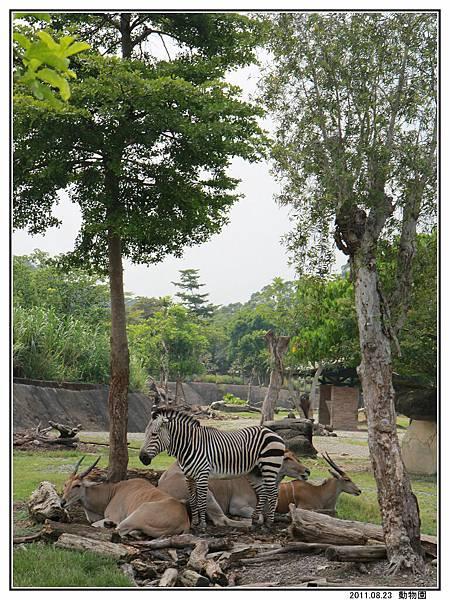 動物園 (34).jpg