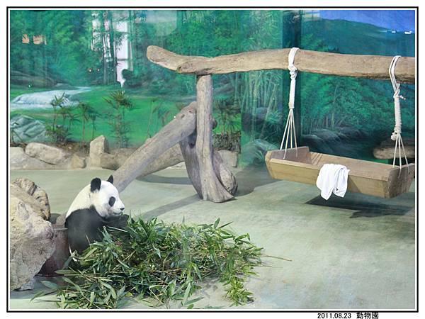 動物園 (40).jpg