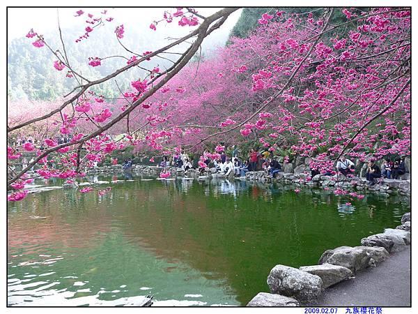 2009 九族櫻花祭06.jpg