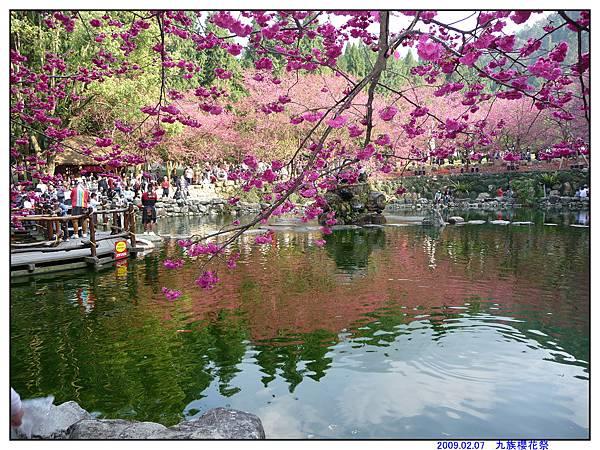 2009 九族櫻花祭07.jpg