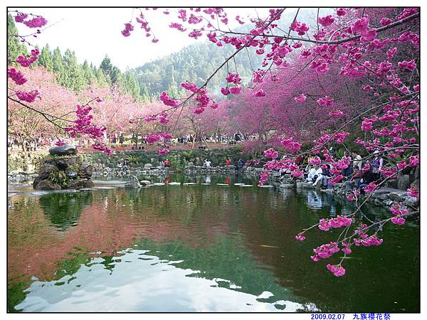 2009 九族櫻花祭08.jpg