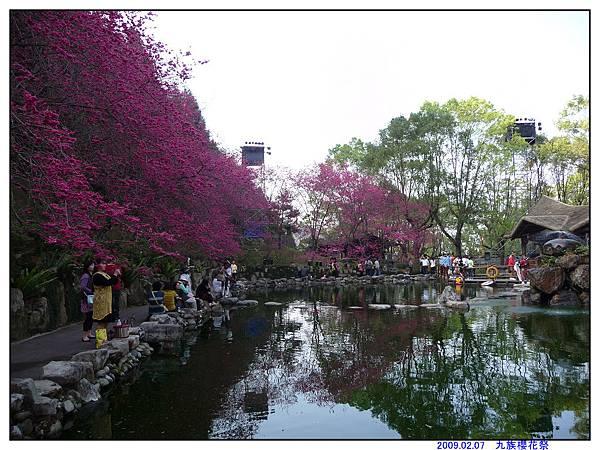 2009 九族櫻花祭12.jpg