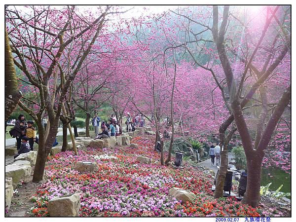 2009 九族櫻花祭15.jpg