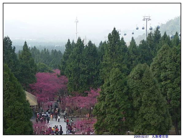 2009 九族櫻花祭16.jpg