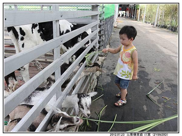 餵羊~其他10