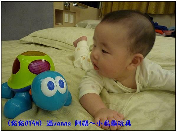 小烏龜玩具01