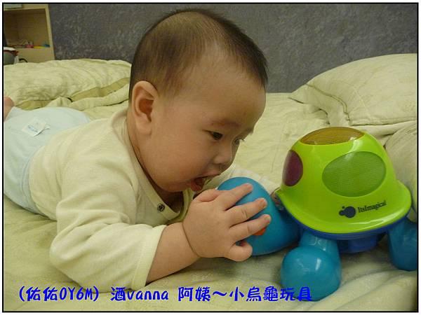 小烏龜玩具06