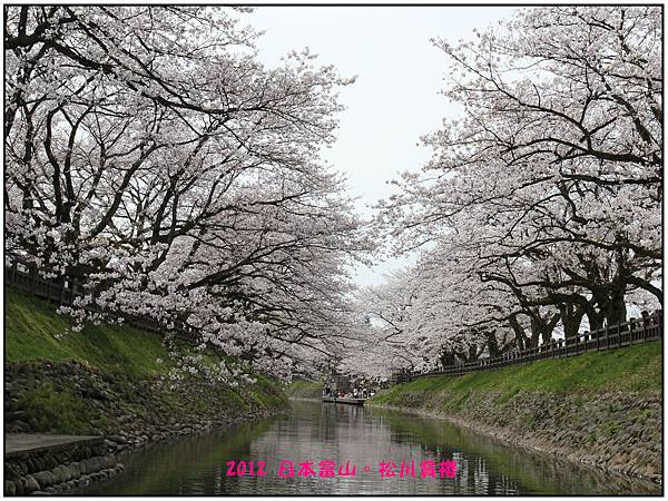 日本富山賞櫻--44