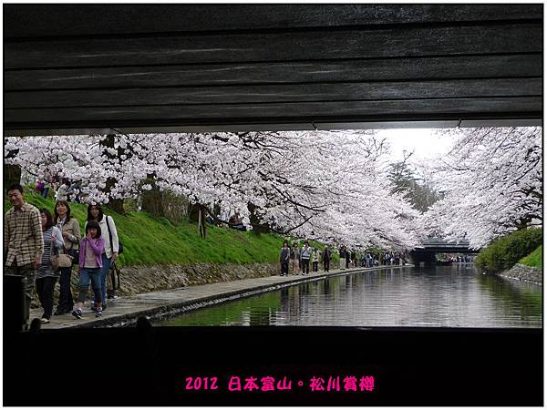 日本富山賞櫻--62