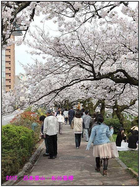 日本富山賞櫻--79