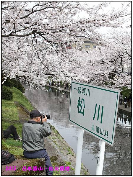 日本富山賞櫻--80