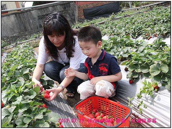 採草莓-01