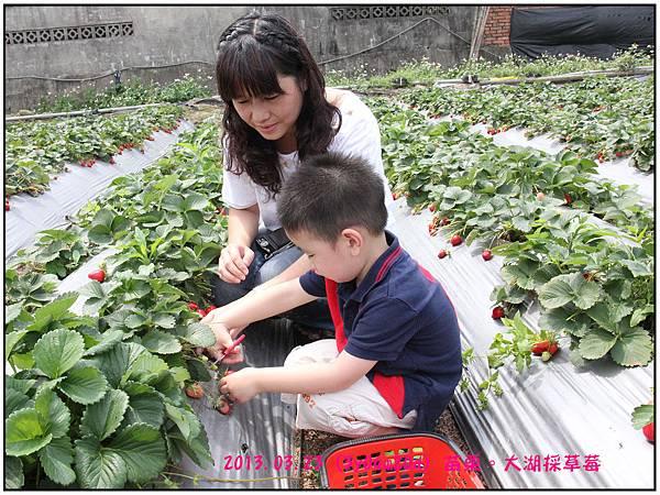 採草莓-02