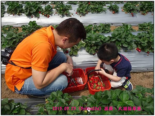 採草莓-04