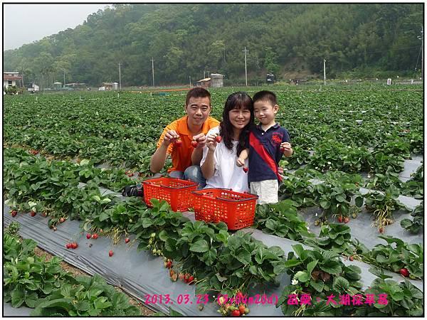 採草莓-11