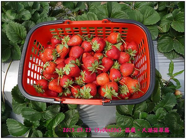 採草莓-12