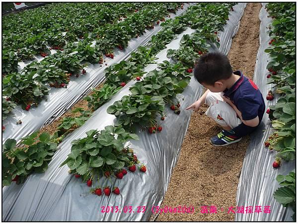 採草莓-22