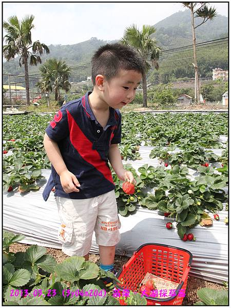 採草莓-23