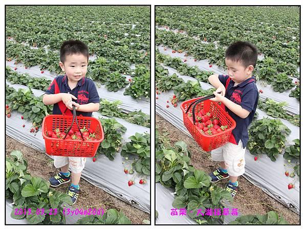 採草莓-28