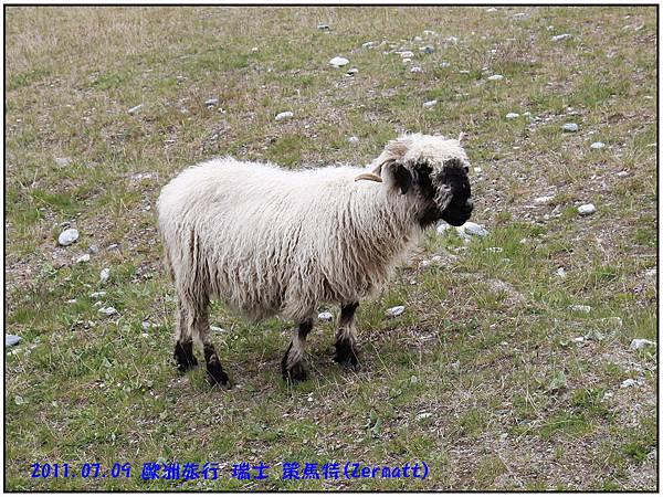 策馬特-Stellisee--53