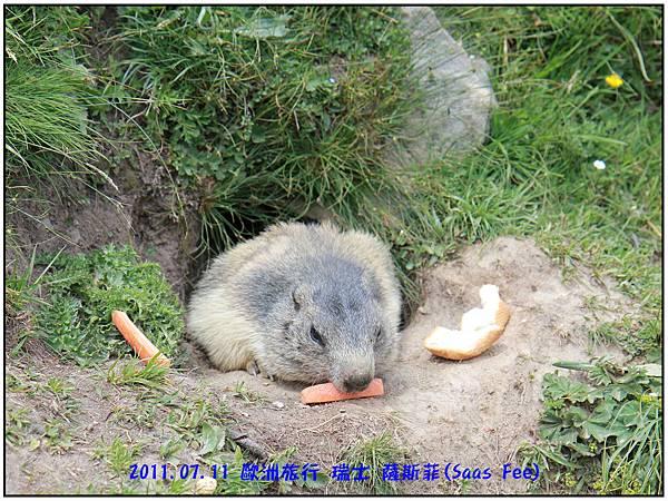 餵食土撥鼠-31