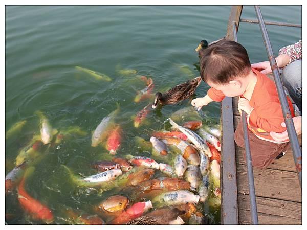 餵魚03.jpg