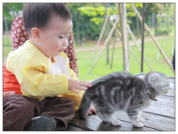 小貓02.jpg