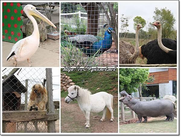 動物六圖.jpg
