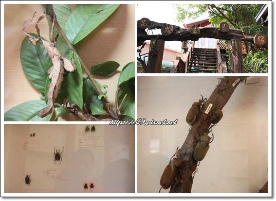 昆蟲館裡的展示.jpg