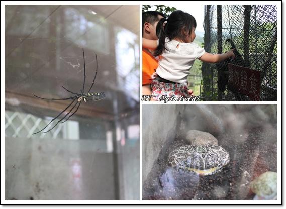 蜘蛛猴子蛤蟆.jpg