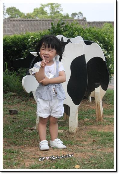 與單隻假牛照.jpg