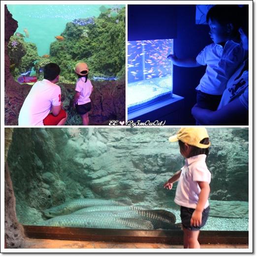 水族館內三圖.jpg
